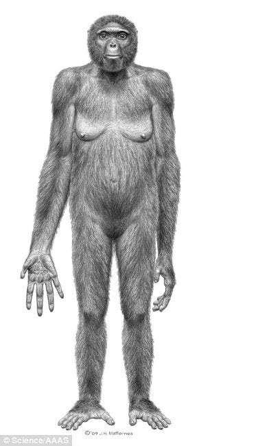 Illustration for article titled New Fossil Discovery is the Closest We've Come to the Missing Link