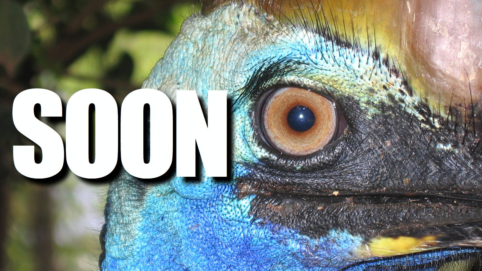 The absolute worst way to die in the wild is Death-by-Cassowary