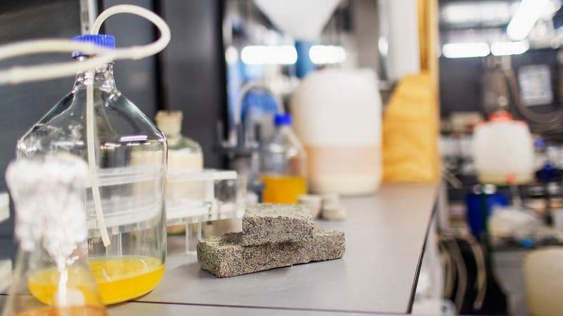 Los bioladrillos no son amarillos ni huelen a orina.