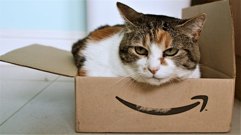 Photo by Stephen Woods. This is not the cat I ordered...