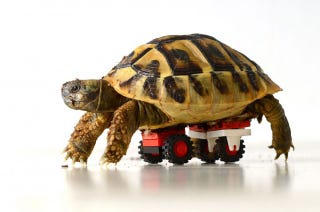 Illustration for article titled This tiny tortoise regains mobility with Lego
