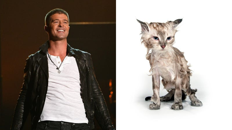 Illustration for article titled Robin Thicke's Paula Lyrics Are as Pathetic as a Soaking Wet Animal