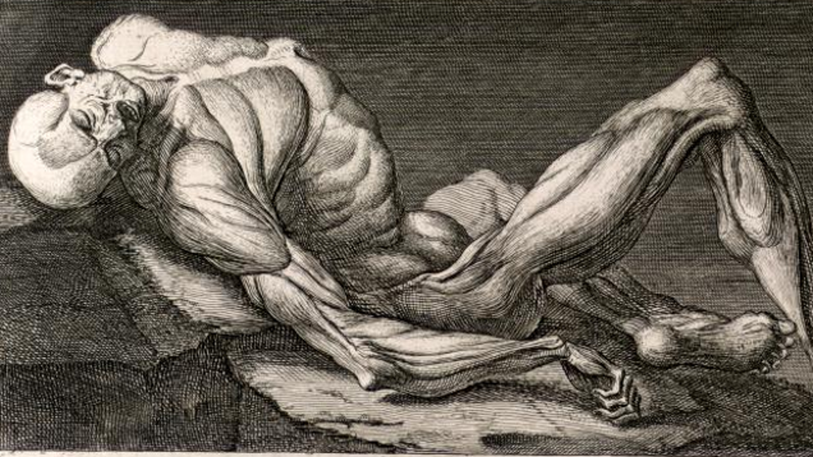 What Does Dianabol Do To Your Muscles