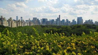 Submit your pre-432 Park photos!