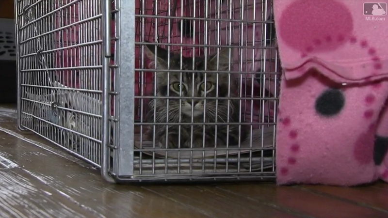 Rally Cat found: Rescue group captures kitty at City Garden