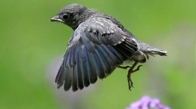 Popular Pesticides Are Killing Birds, Too
