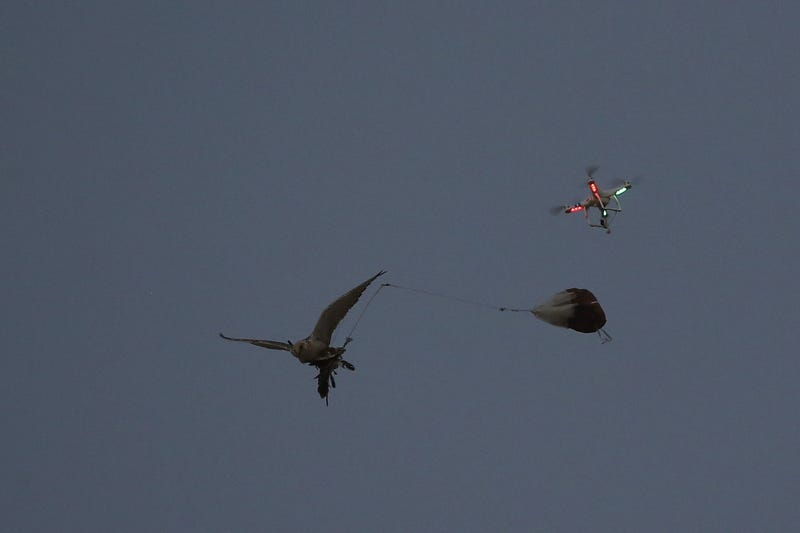 Illustration for article titled Falconers in Abu Dhabi Train Their Raptors With Drones