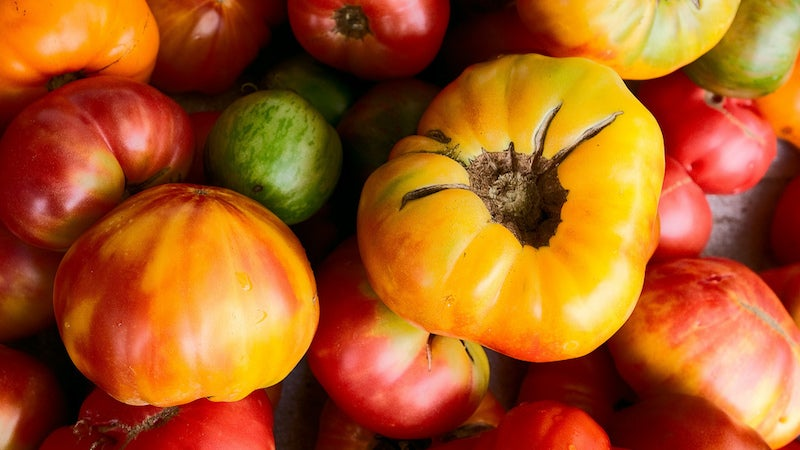 Scientists Are Closer Than Ever to Growing a Tomato That Ripens But Doesn't Rot