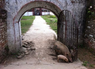 Illustration for article titled George Orwell Was Actually Born on This Animal Farm in India