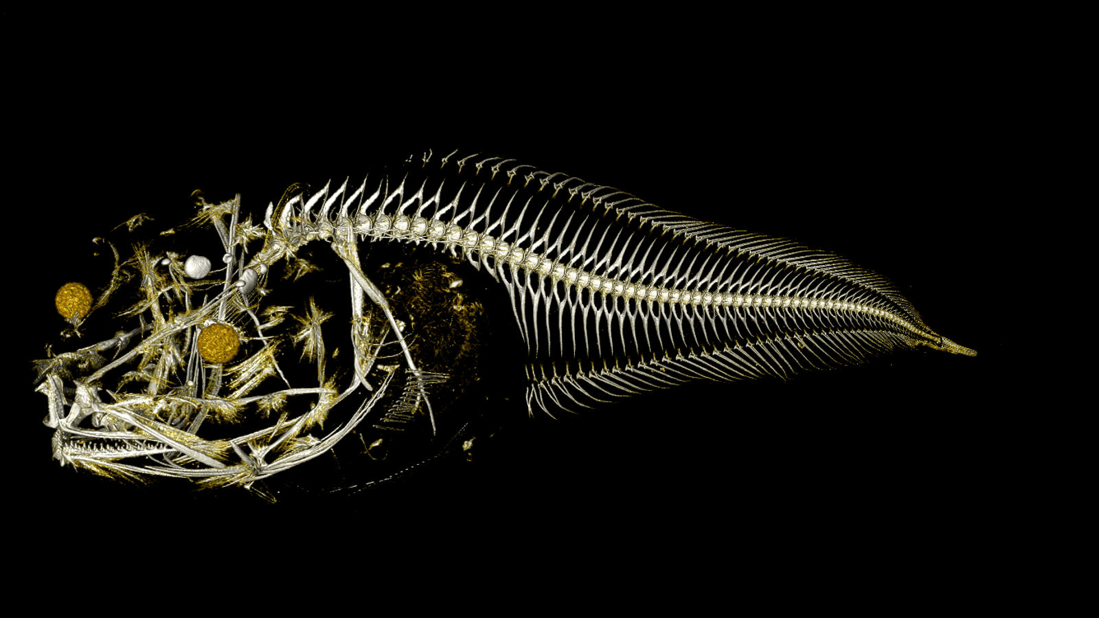 Three Freaky New Fish Species Discovered in One of the World's Deepest Trenches