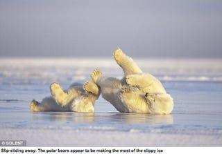 Illustration for article titled Adorable Polar Bear Shows Adorable Cub How To Ice-Skate