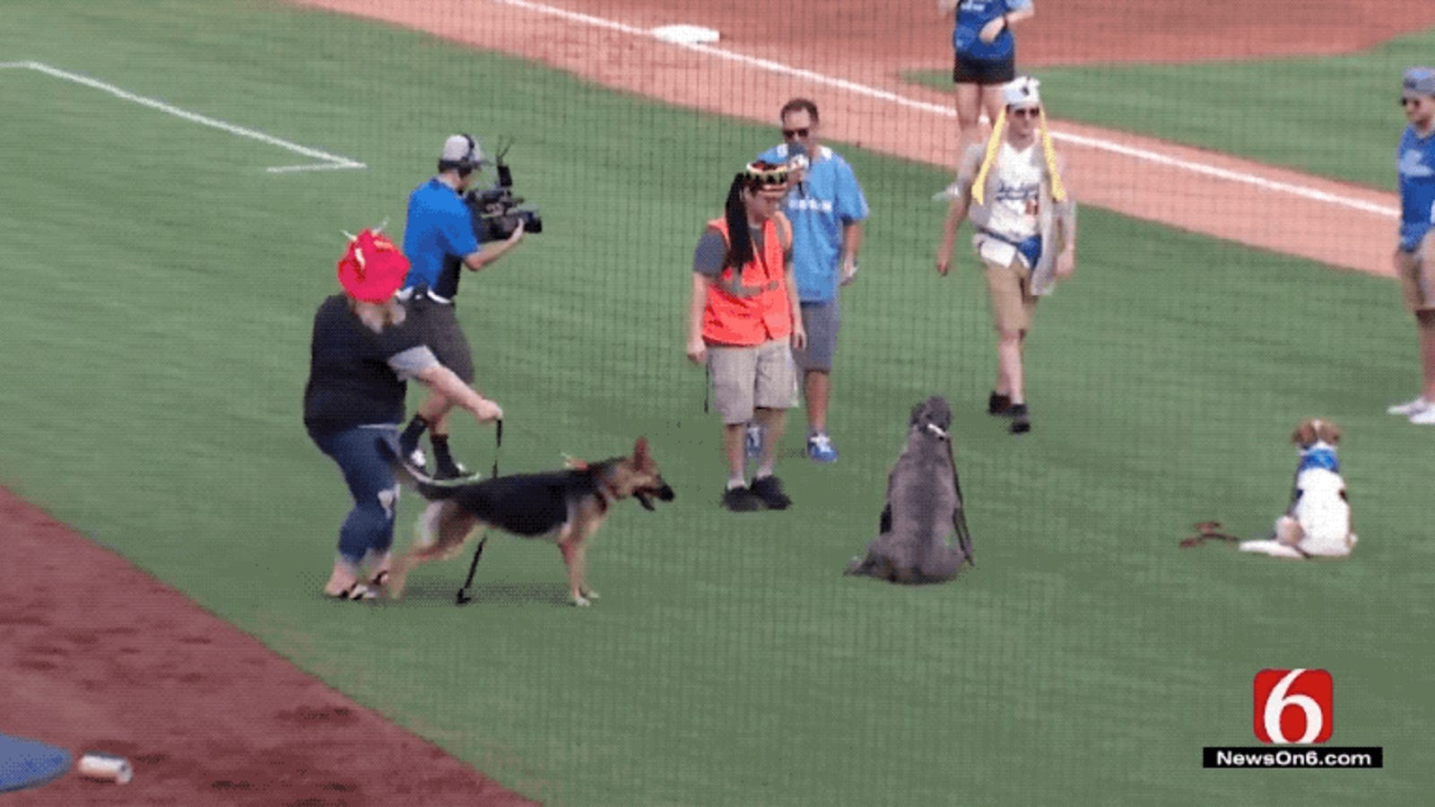 Bark In The Park Event Goes Sideways When Very Good Dog Spots OH MY GOD ARE THOSE BASEBALLS!