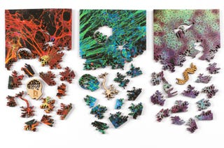 Illustration for article titled Explore the Microscopic World With These Gorgeous Scientific Puzzles