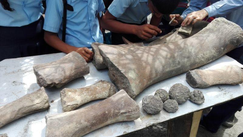 Illustration for article titled Cazadores de fósiles encontraron huesos de una ballena antigua ... y luego vieron estas marcas de mordedura