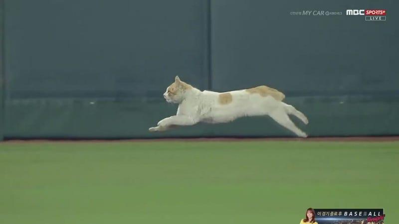 This cat just earned Eadweard Muybridge $25,000.
