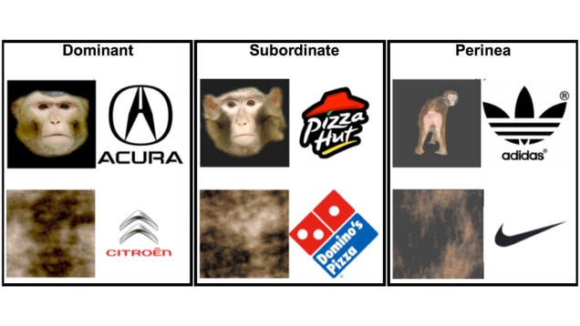 Why Scientists Taught Monkeys to Associate Brand Logos With Genitals