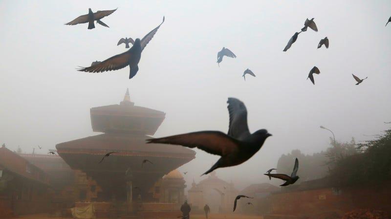 Actual pigeons flying through fog in Kathmandu, Nepal, in January 2019.