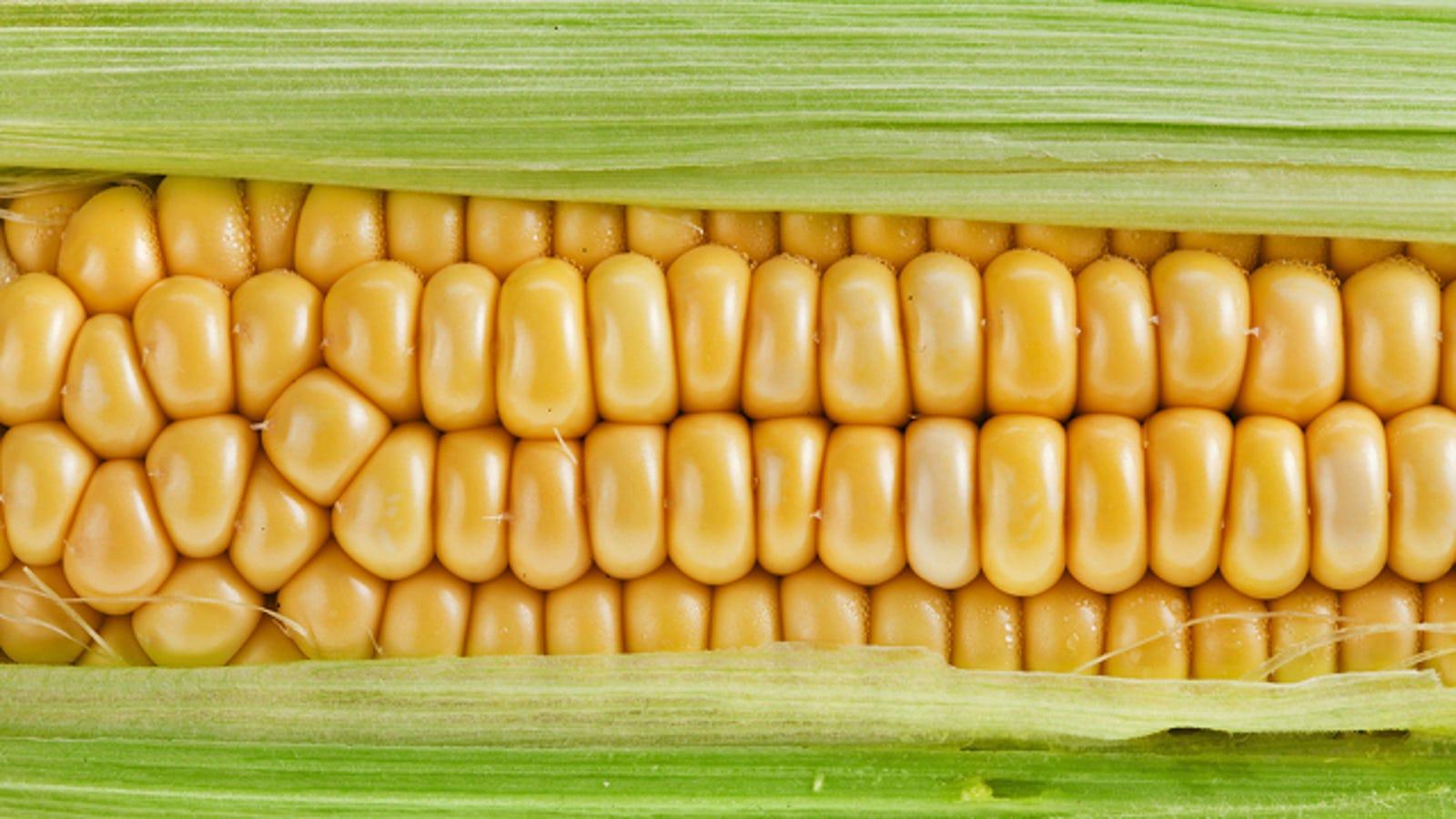 Good crop, bad crop: French scientists dismiss Monsanto
