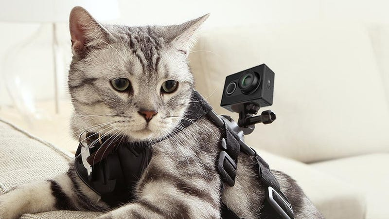 Yi Action Cam, $50 with code D4Y4G625. Cat harness not included.