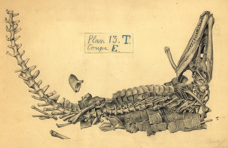Illustration for article titled The 19th-Century Artist Who Sketched Fossils In Their Death Poses