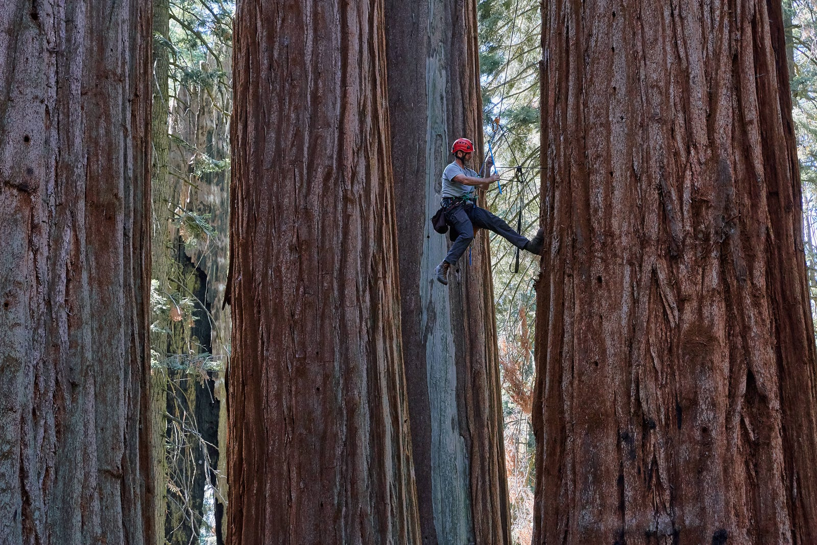 Meet the Botanists Who Climb the World's Tallest Trees