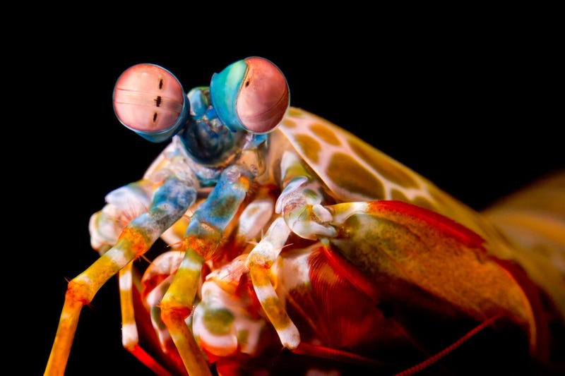 What big eyes to roll with too. Image: Michael Bok, University of Lund