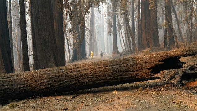 California's Carbon Offset Program Is a Complete Disaster