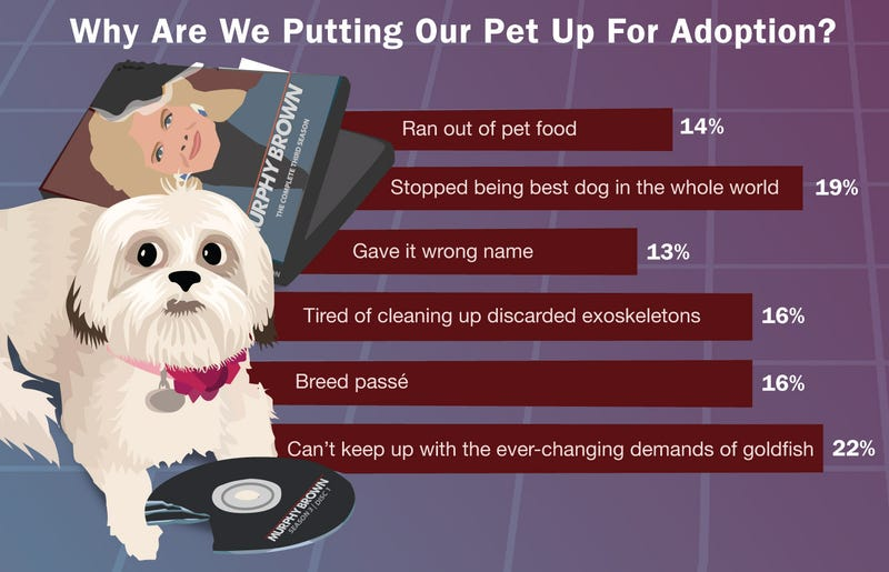 Illustration for article titled Why Are We Putting Our Pet Up For Adoption?