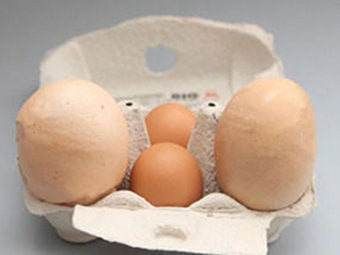 "Illustration for article titled Hen Beats Own Recent ""World's-Largest-Egg"" Record"