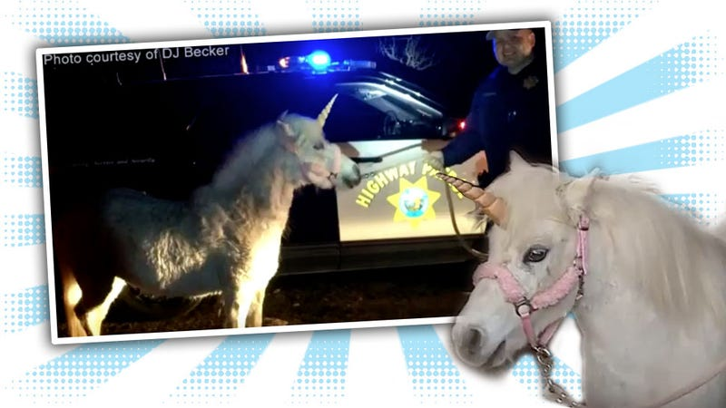 Illustration for article titled Fresno-Area Unicorn Leads CHP On Three-Hour Chase