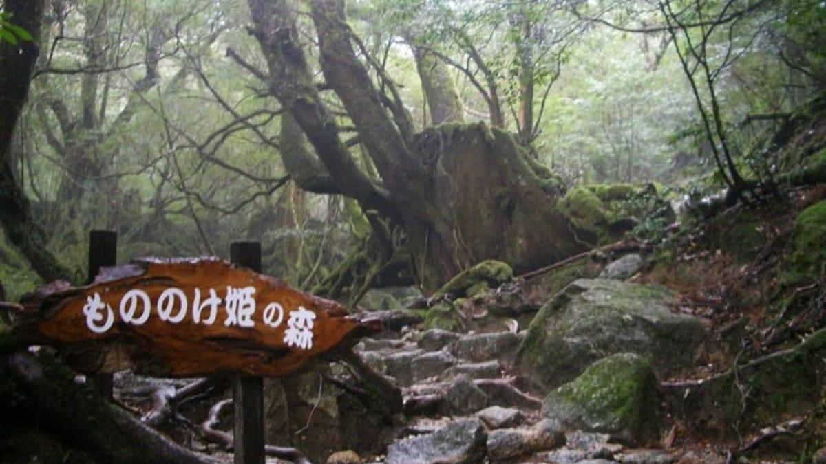 Visit the Real Princess Mononoke Forest