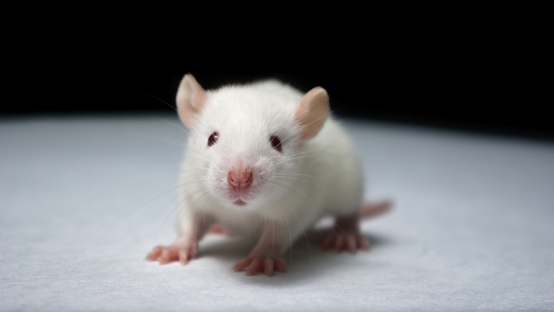 Illustration for article titled Don't believe the hype: We haven't cured Down Syndrome in mice