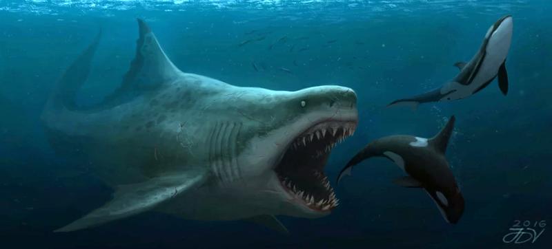 Representación artística de un megalodón persiguiendo orcas