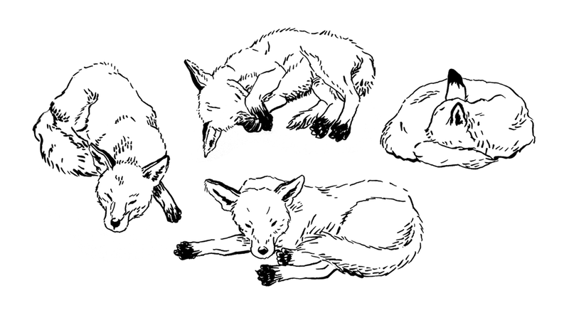 Illustration for article titled Sleeping Positions of Fantastic Mr. Fox