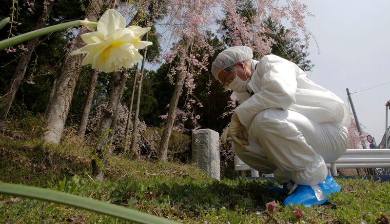 Los granjeros en Fukushima están sembrando en suelo artificial hecho de poliéster