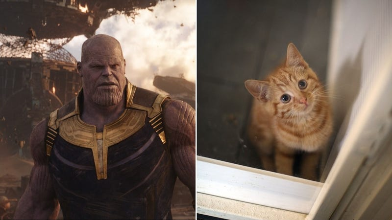 Illustration for article titled Yes, Thanos also killed half of all puppies and kittens in Avengers: Infinity War