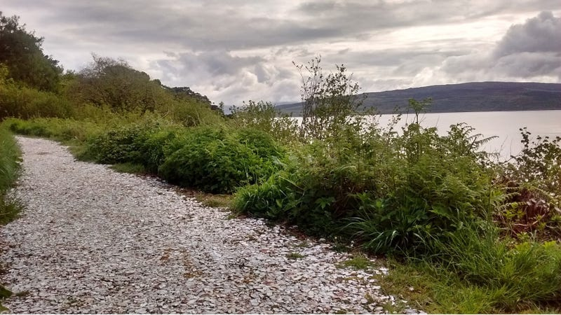 A mollusc shell pathway in Isle of Mull, Scotland. Credit: James Morris