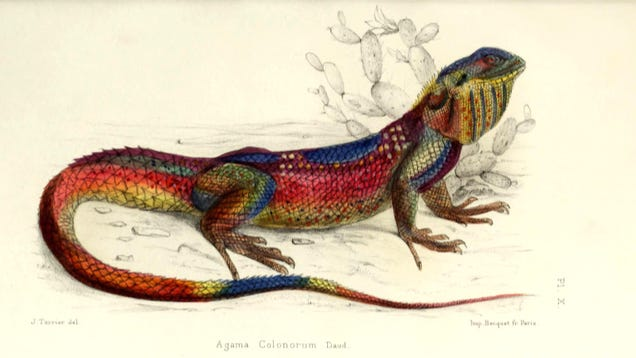 Get Free Science Illustrations From the Biodiversity Heritage Library