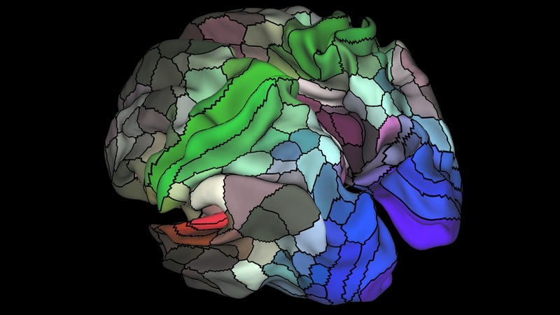 Researchers have mapped 180 areas of the human cerebral cortex, of which 97 are completely new to science. (Image: Matthew F. Glasser, David C. Van Essen)