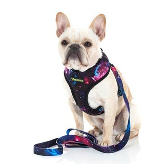 Illustration for article titled Interesting Facts About French Bulldog Harness