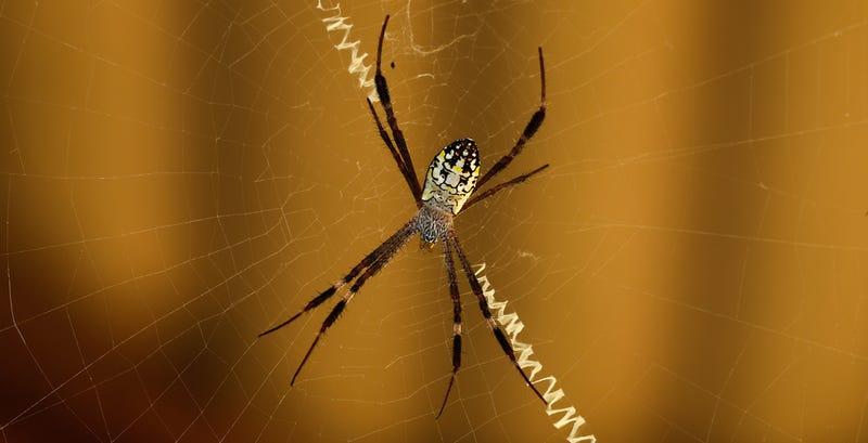 Illustration for article titled La psicología del miedo: ¿Por qué nos asustan las arañas?