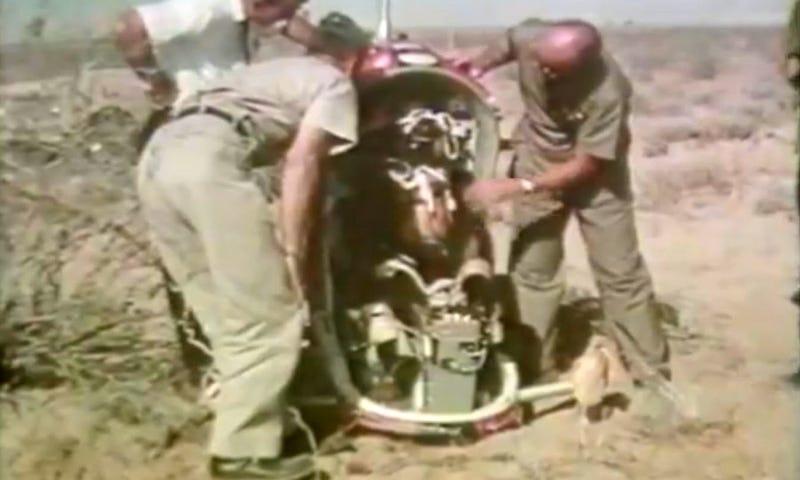Illustration for article titled El día que la fuerza aérea de Estados Unidos eyectó un oso drogado de un avión a 10.000 metros de altura
