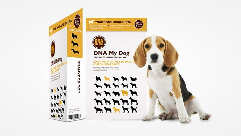 Illustration for article titled The DNA My Dog Breed Identification Test Is Now Just $50 (35% Off)