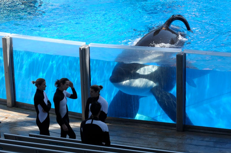 Illustration for article titled SeaWorld Is Currently Being Pummeled By Lawsuits