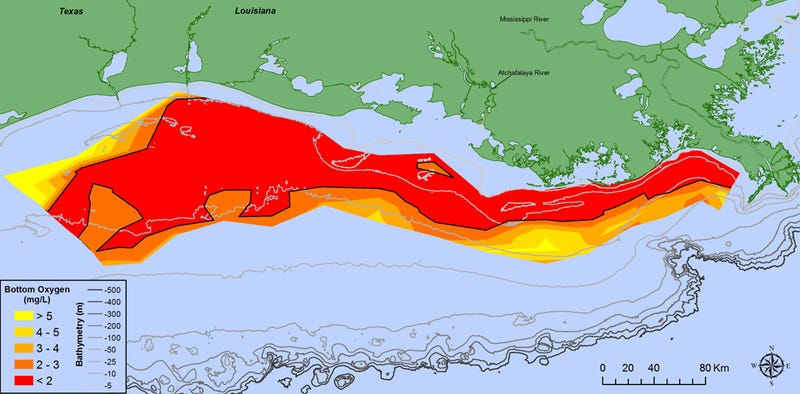 Measuring 8,776 square miles, this year's dead zone in the Gulf of Mexico is the largest ever recorded. (Image: N. Rabalais, LSU/LUMCON)