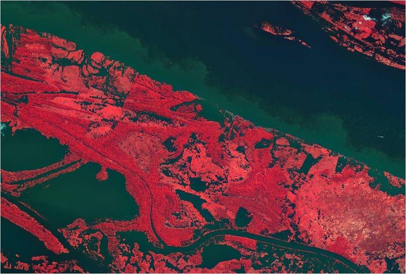 Illustration for article titled El Amazonas desde el espacio, como nunca lo habías visto