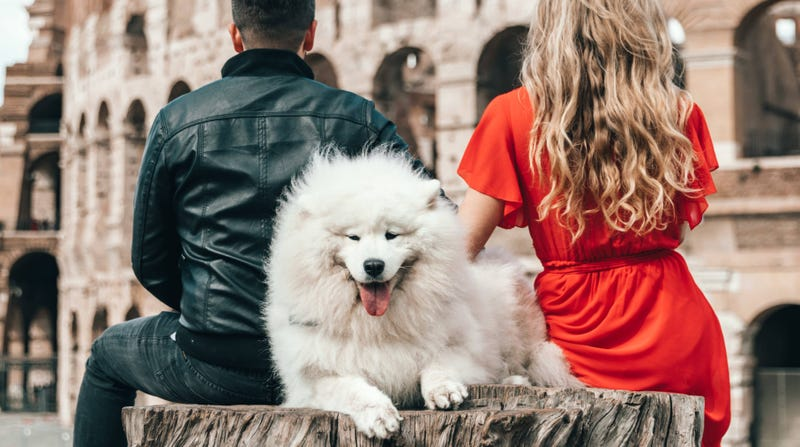 How to Travel Abroad With Your Pet
