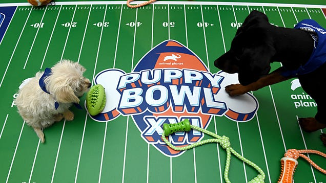 How to Watch Puppy Bowl XVII on Super Bowl Sunday