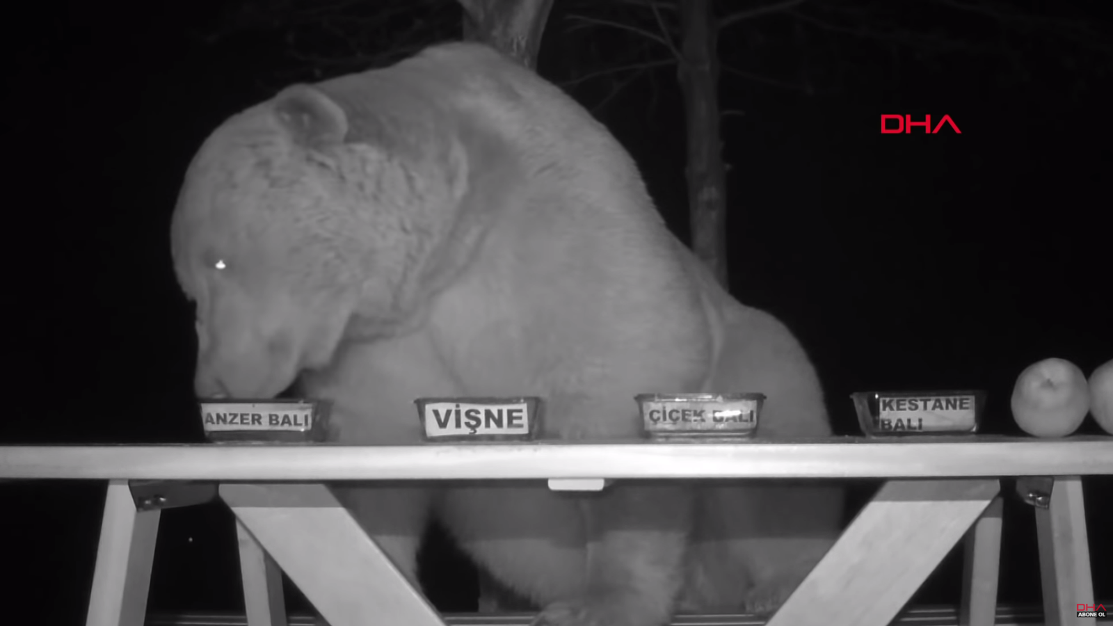 Welp, Here Are Some Turkish Bears Caught on CCTV Taste-Testing Honey