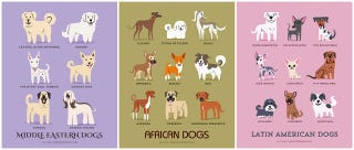 Illustration for article titled Adorable Drawings of Dog Breeds, Grouped By Their Place of Origin